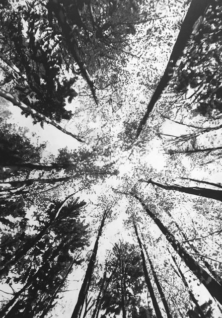 Gerard Lucian Ricard -Elevation