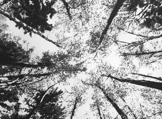 Le noir et blanc est éminemment artistique et poétique.