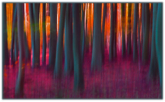 Beechwood AutumnA_T009 (63x39)blkege)_ed