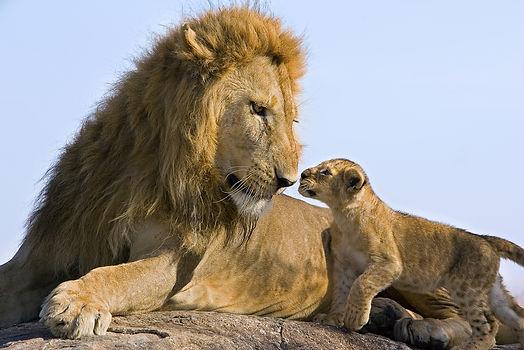 Suzi Eszterhas_Remembering_Lions.jpg