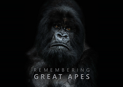 Remembering Great Apes.png