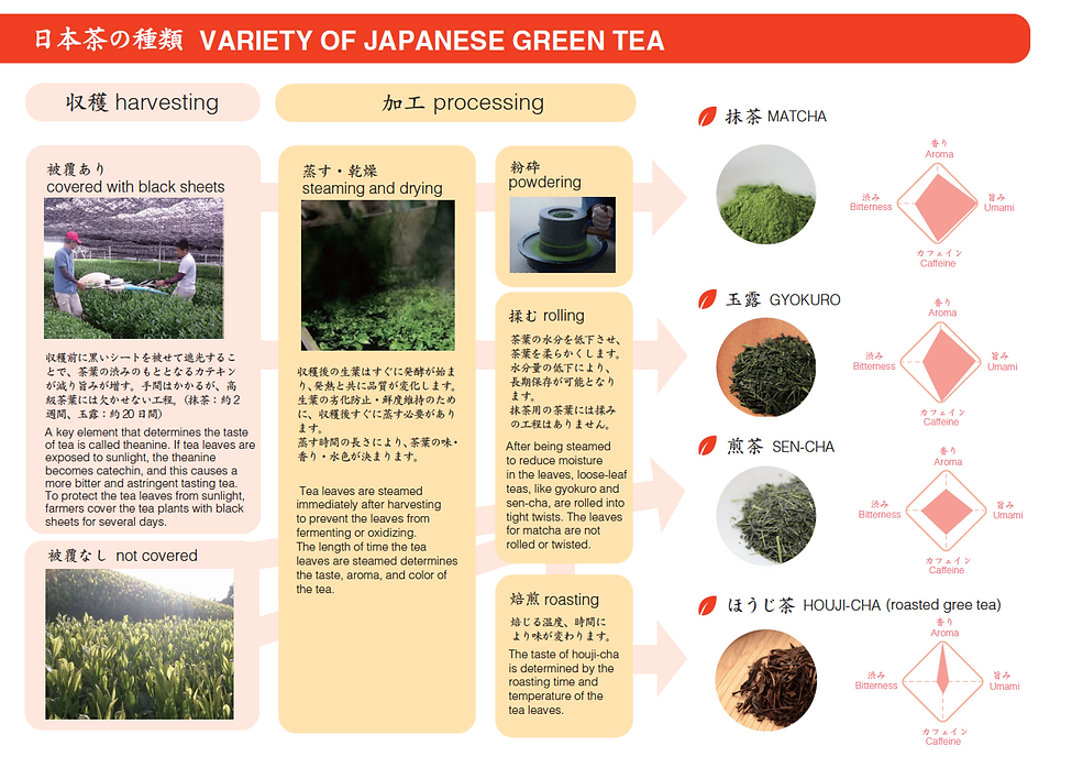 d:matcha - d:matcha's visual guide on the production method for the different varieties of Japanese green tea. At our factory in Wazuka, Kyoto, we produce matcha, gyokuro, sen-cha, and houjicha.