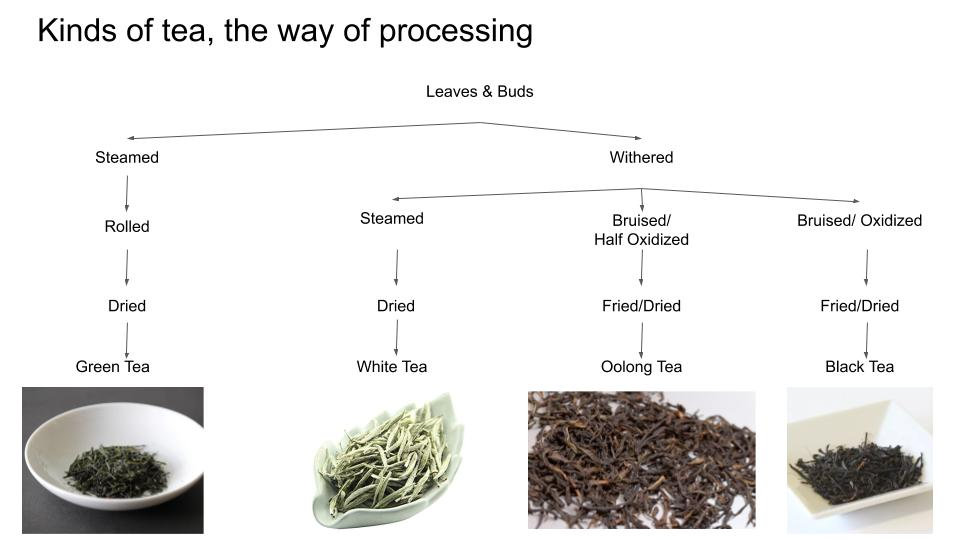 d:matcha - The different types of processing treatments used to treat tea. Depending on the processing methods, different types of tea are produced.