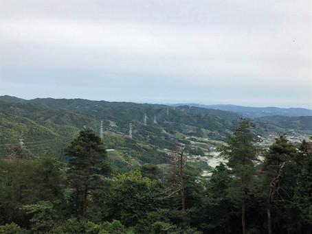 Organic Tea Field: Harayama, Wazuka, Kyoto