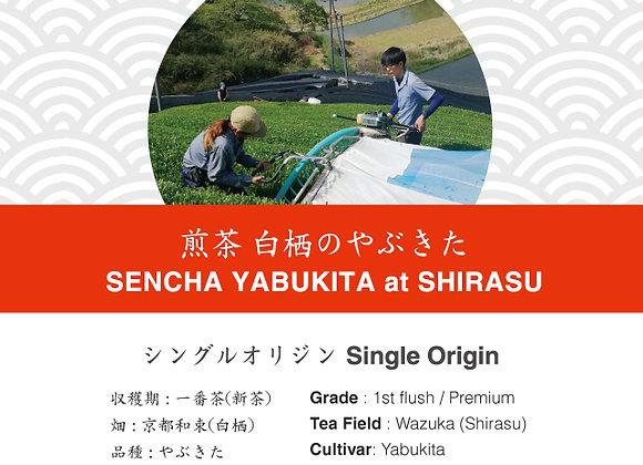 Sencha: Yabukita Shirasu Wazuka 2019 First Flush