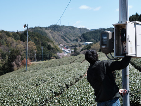 Japan's threatened fields of green
