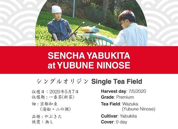 2020 Sencha First Flush: Yabukita - Yubune-Ninose, Wazuka