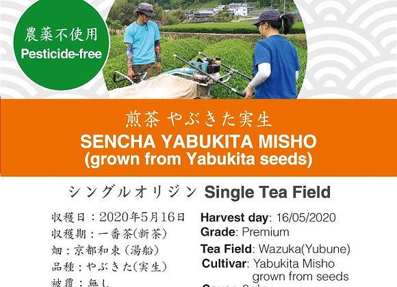 2020 Sencha First Flush: Sencha Yabukita Misho