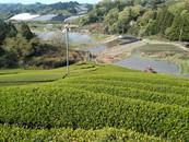D:matcha's tea field located in the Shirasu region of Wazuka Town.