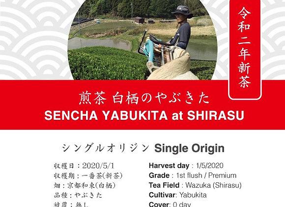 2020 Sencha First Flush: Yabukita - Shirasu, Wazuka