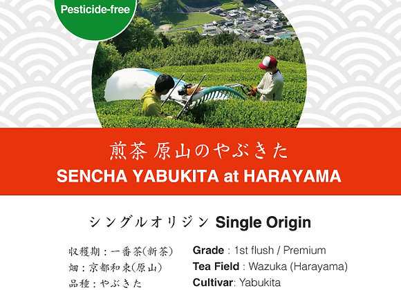 Sencha: Yabukita Harayama Wazuka 2019 First Flush