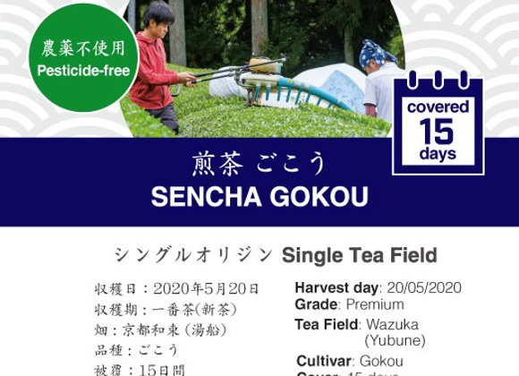 2020 Sencha First Flush: Gokou