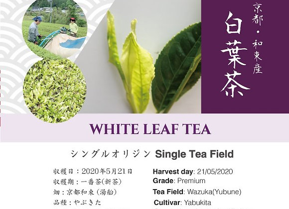 2020 Sencha First Flush: White Leaf Tea