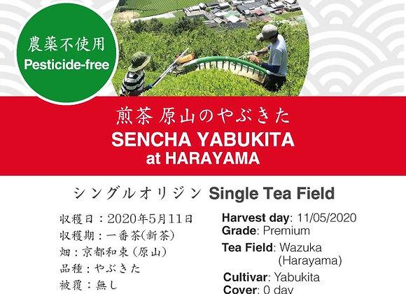 2020 Sencha First Flush: Yabukita - Harayama