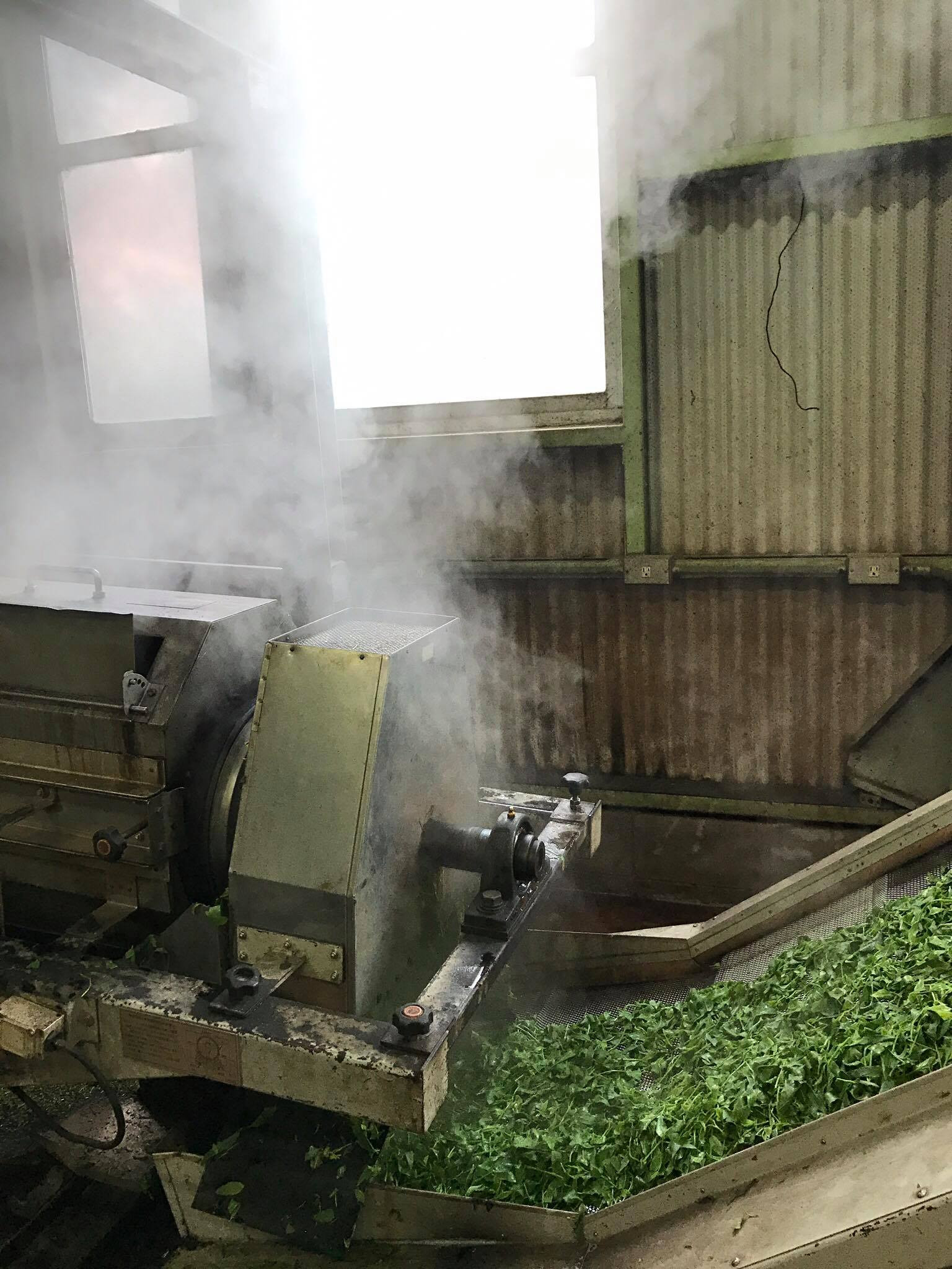 Tea Picking and Factory Tour