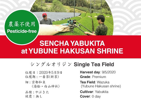 2020 Sencha First Flush: Yabukita - Yubune Hakusan Shrine