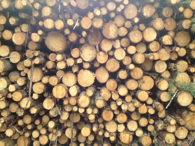 Chemin en bois rond - Lac St-Jean