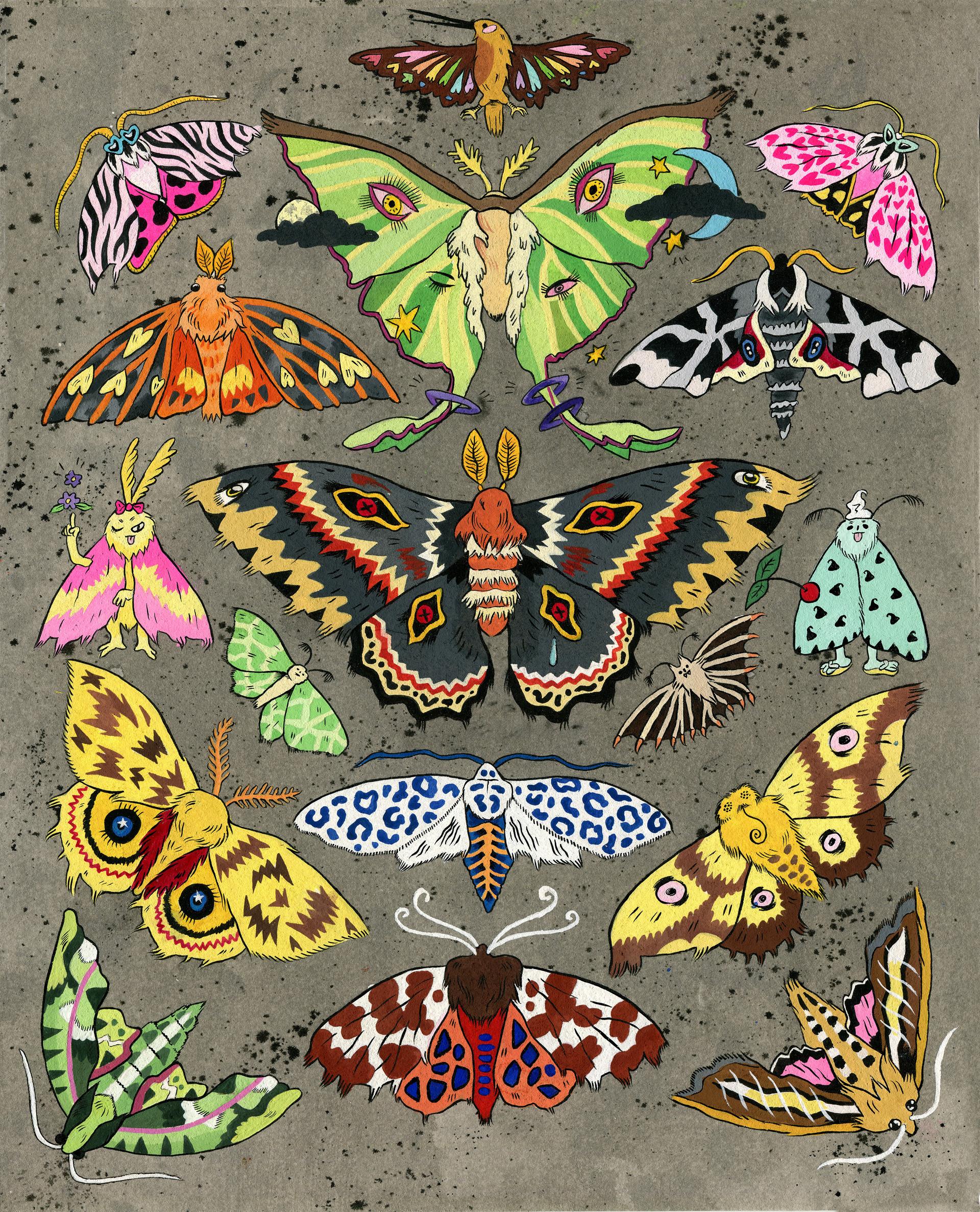 Moths of New England V2