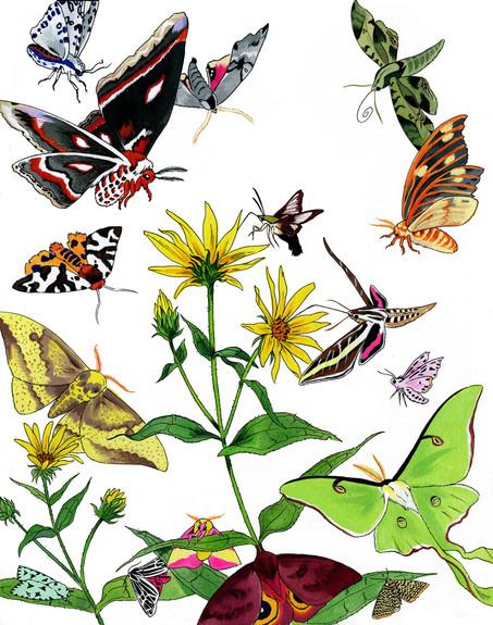 New England Pollinators