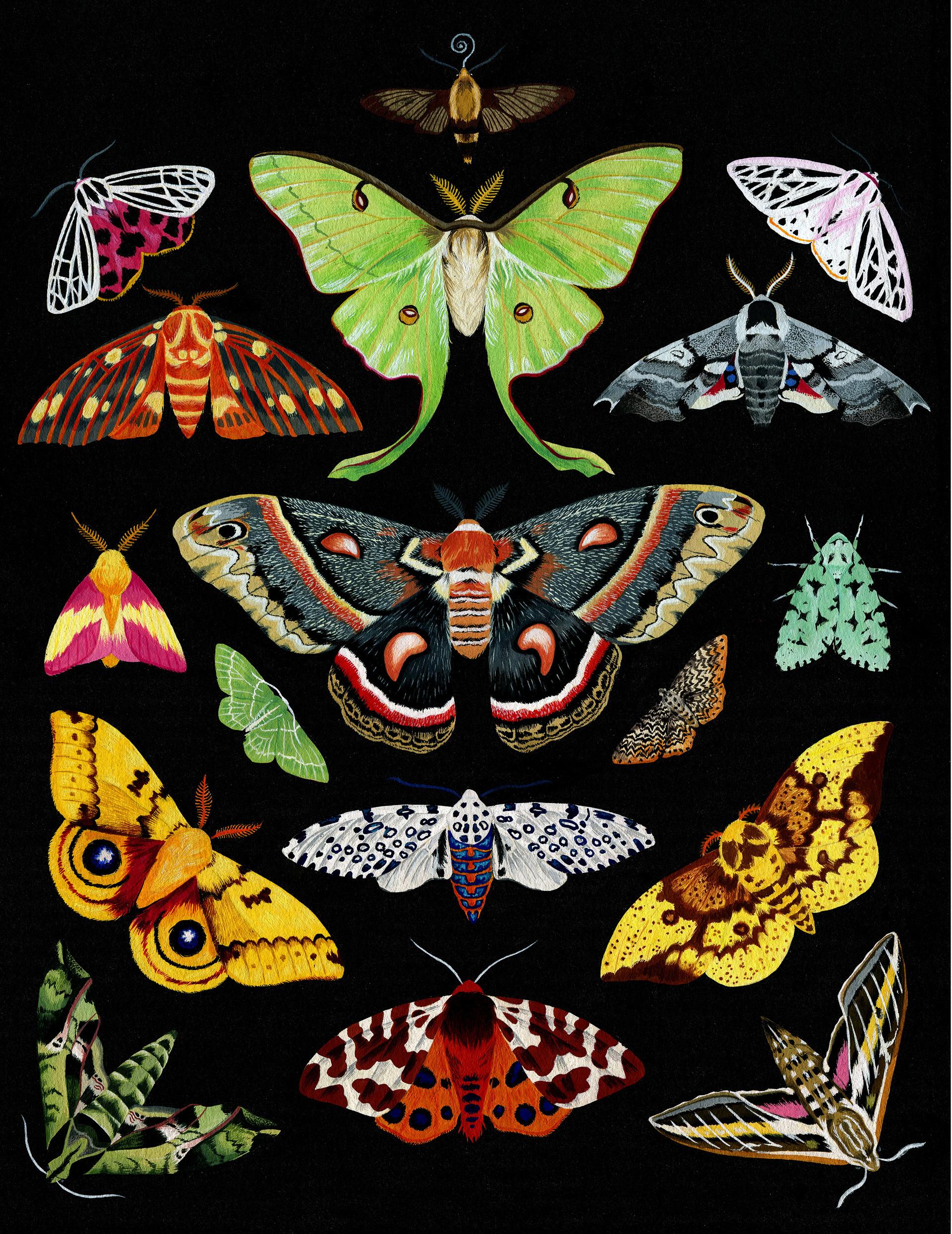 Moths of New England