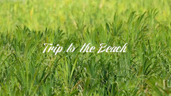 Canon EOS 5D MOVIE Trip to the Beach
