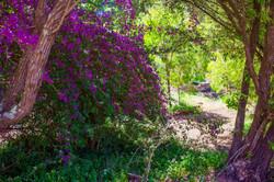 Beautiful Premalaya Grounds
