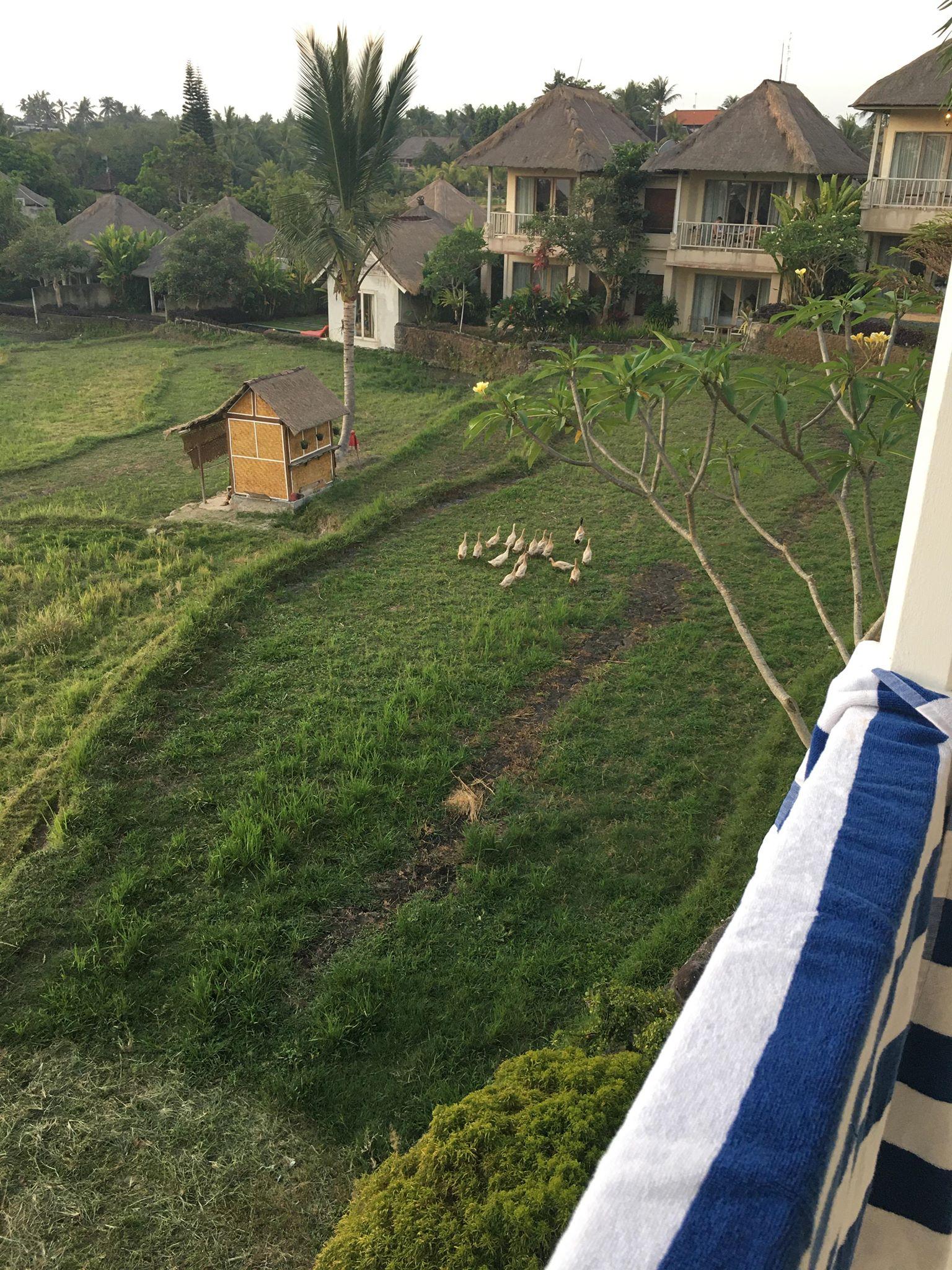 bsaya ducks