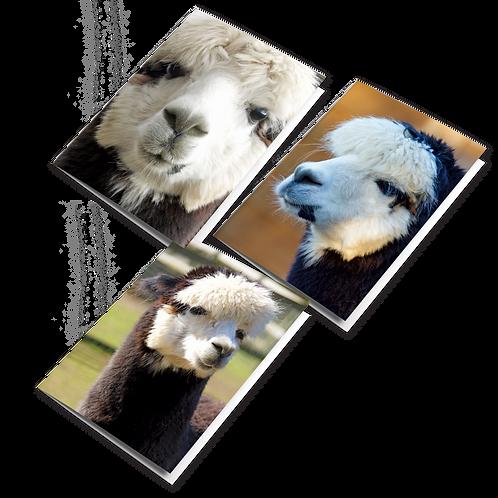 Archie the Alpaca Greeting Cards (PK 3)