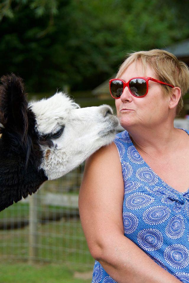 Trelawn Alpaca Experience