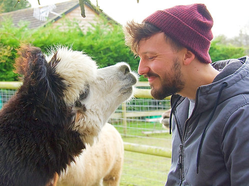 Trelawn Alpaca Experience Voucher