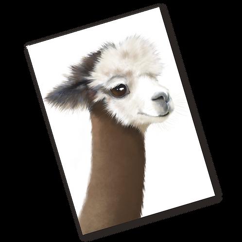 Archie The Alpaca LIMITED EDITION Illustration Print