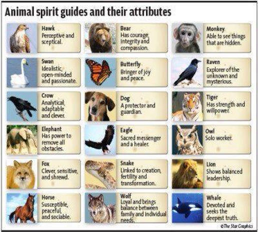 Meanings of animal spirit guides