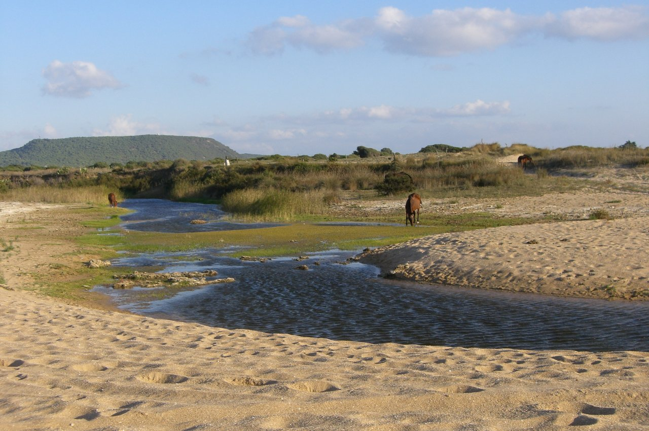 Playa Mangueta