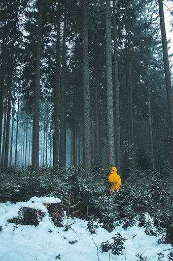 yellow jacket in woods.jpg