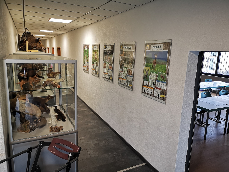 Tierpräparate Jagdschule
