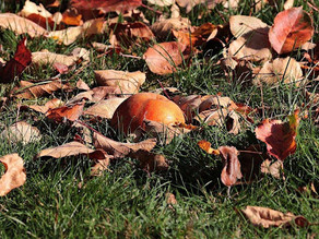 Fall Clean-Up for Spring Success