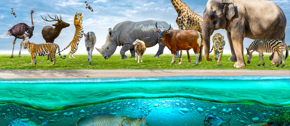 Starting From Where You Are: What Climate Action Animal Are You?