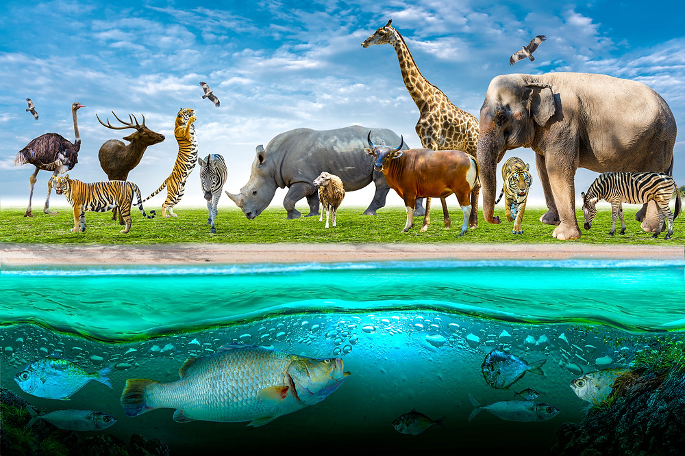 Image of an array of African Animals
