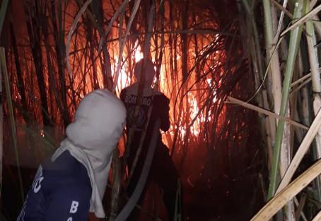 Bomberos sofocaron 74 incendios de masa vegetal.