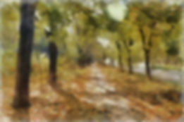 Forest Background Edited.jpg