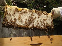 June Beekeeping Tips