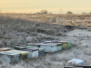 Over-Wintering your Hive