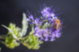pexels-photo-669413.jpeg
