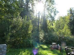 Foto von im Garten