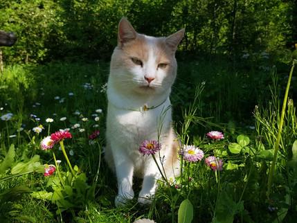 Alien Katze auf Märchenwiese.jpg