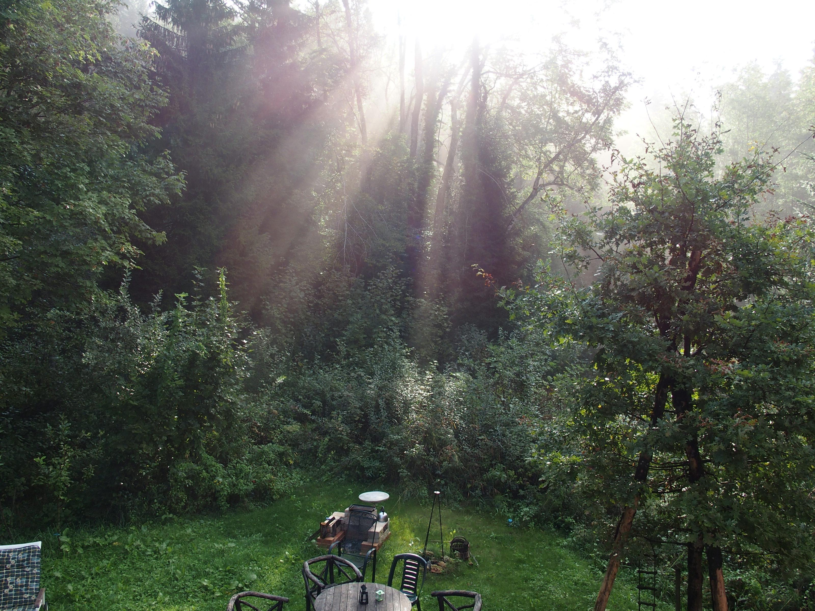 Morgenstimmung im Garten
