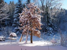 Garten im Winter