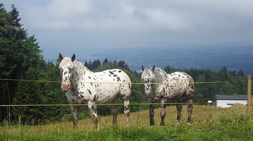 Pferde auf der Weide 50 m vor dem Schwedenhaus