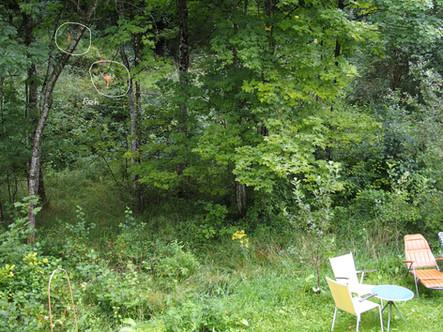 Rehe im Wald neben dem Garten