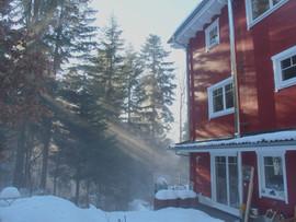Nebel im Winter